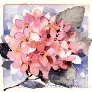 Avattava neliökortti: Hortensiaoksa