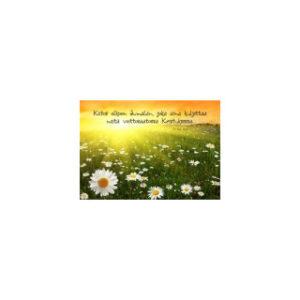 Kortti: Päivänkakkaraniitty (2Kor.2:14)