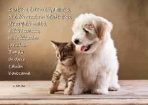 Kortti: Kissa ja koira (2.Kor.13:11)