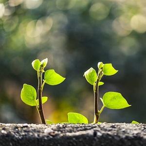 Hengellinen kasvu