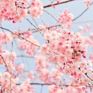 Kevään juhlat