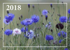 Päivän seinäkalenteri 2018 kirkkovuoden teksteillä