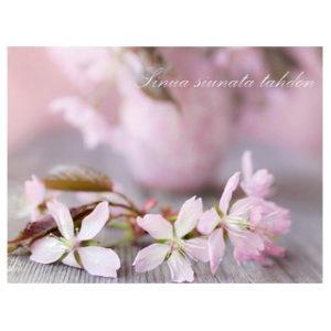 Kortti, Kirsikankukka – Sinua siunata tahdon