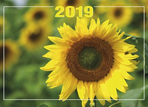 Päivän seinäkalenteri 2019 kirkkovuoden tekstein