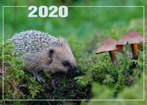 Päivän seinäkalenteri 2020 kirkkovuoden tekstein