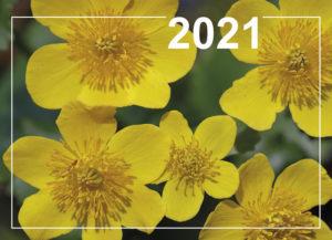 Päivän seinäkalenteri 2021 kirkkovuoden teksteillä